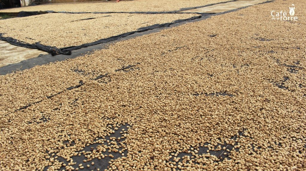 The Coffee Beans are dried